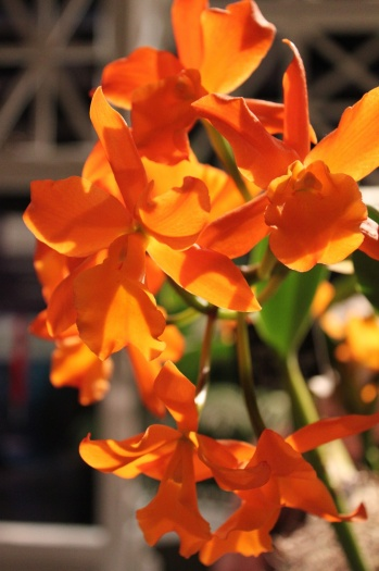 Orchid5 (2)