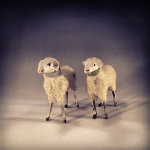 Between Instagram and my new gradient background-winning! These are my first two sheep, Germany and 56 years old.